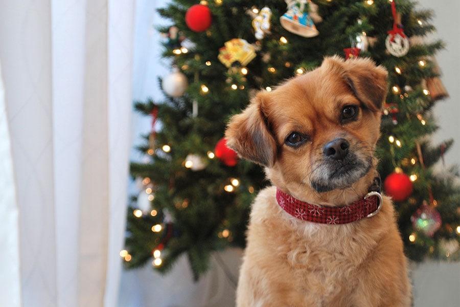 Holiday Pet Sitting