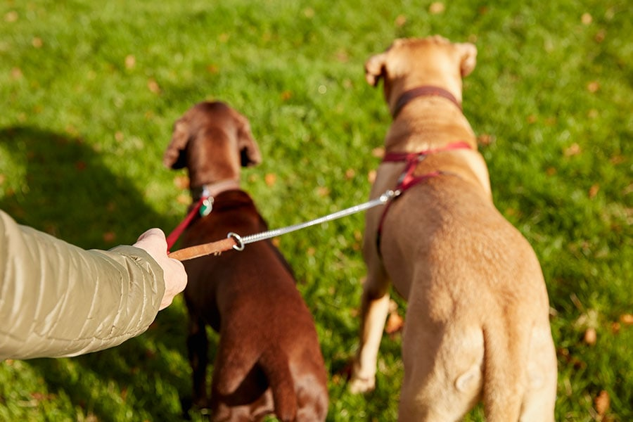 Open Letter to the Judge Who Told a Pet Sitter to get a REAL JOB